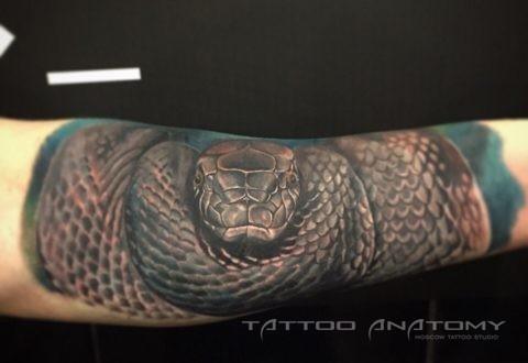 Тату мужское змея на руке цветное в стиле реализм